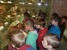 Výlet - Slezské zemské muzeum